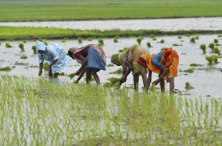 Une Académie d'agroécologie Slow Food ouvre en Afrique de l'Est