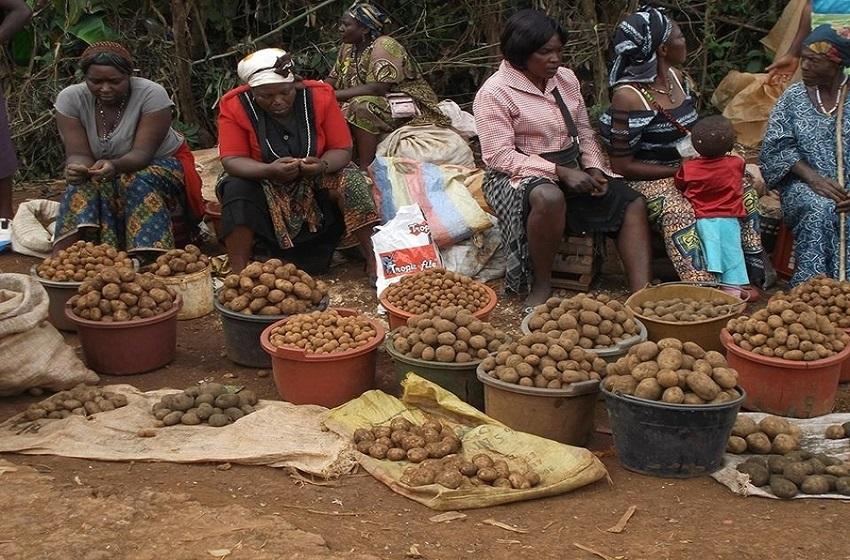 Illustration des Femmes-rurales en activité-_MyAfricaInfos
