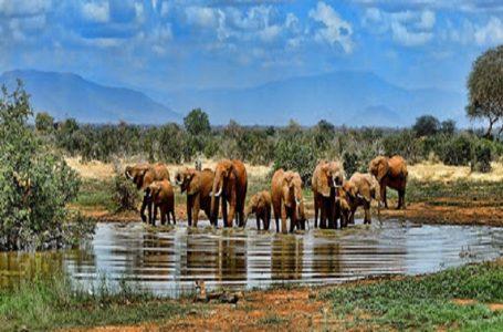 Parc national Kruger, un véritable joyau sud-africain aux touristes