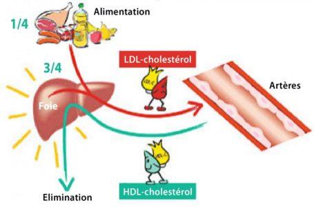 Le cholestérol, on en parle!