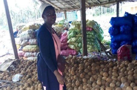 À la découverte de La Reine des cocos