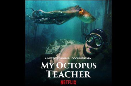 """Afrique du sud/ Le documentaire """"My Octopus Teacher"""" récompensé aux """"Oscars 2021"""""""