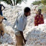 secteur de l'industrie du coton-MyAfricaInfos